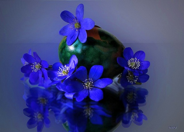 violetss