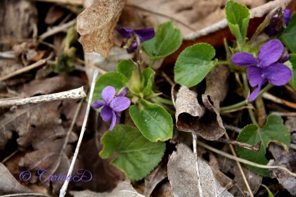 jax and violets2