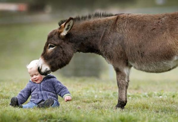 mini-donkeys2