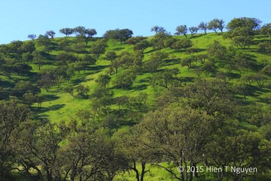 Along Highway 46: green hills.