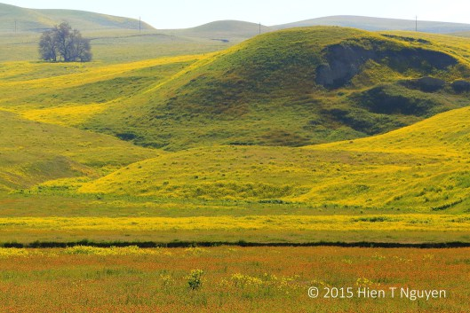 Along Highway 46: wildflowers