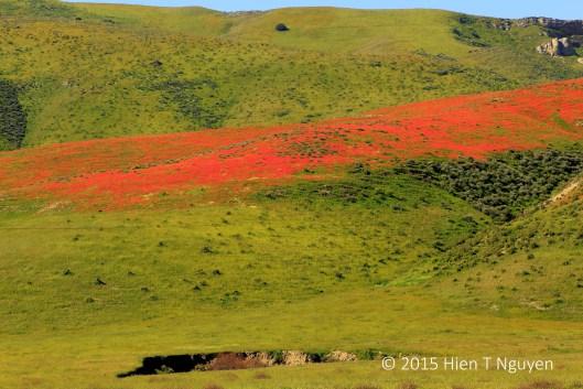 Highway 46 wildflowers
